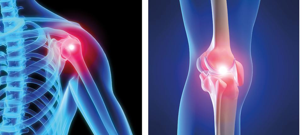 Schulter und Knie - Anatomie, Testungen, Übungen